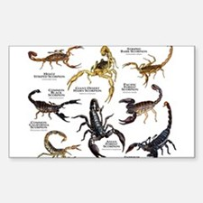 Scorpions of the World Sticker (Rectangle)