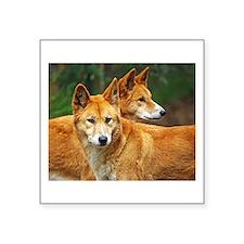 dingo Sticker