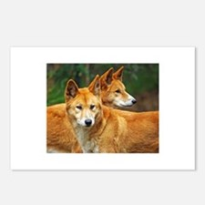 dingo Postcards (Package of 8)