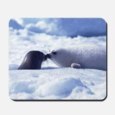 Harp Seal Mousepad