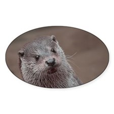 Sweet young Otter Decal