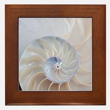 Nautilus Framed Tile