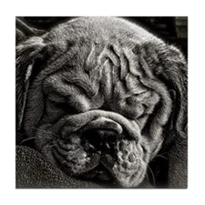 English Bulldog Puppy Art Tile Coaster
