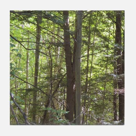 Scenery Of Trees Tile Coaster