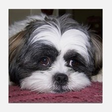 Shih Tzu Dog Photo Image Tile Coaster