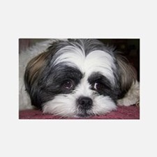 Shih Tzu Dog Photo Image Magnets