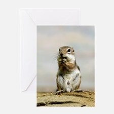 Gopher_2014_1101 Greeting Cards