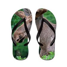 Elk_2014_1101 Flip Flops