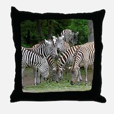 Zebra_2014_1101 Throw Pillow
