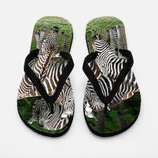 Zebra_2014_1101 Flip Flops