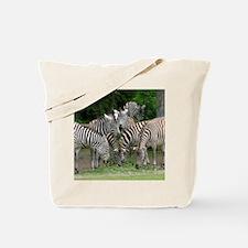 Zebra_2014_1101 Tote Bag