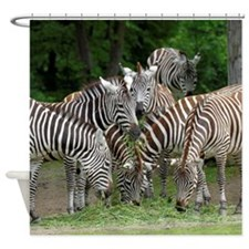 Zebra_2014_1101 Shower Curtain