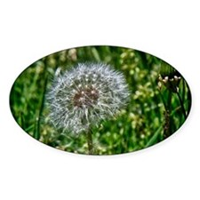 Dandelion 1 Decal