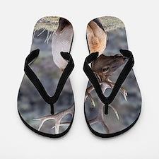 bull elk Flip Flops