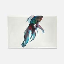 Fancy Betta Fish Magnets