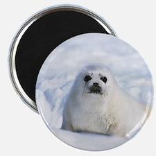 Harp Seal Magnet
