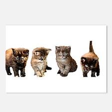 Kitten Postcards (Package of 8)