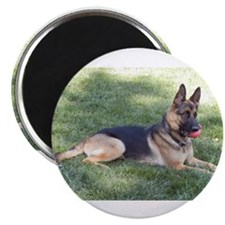Unique German shepherds Magnet