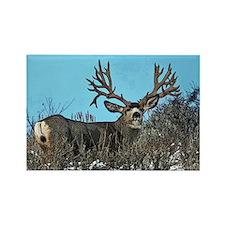 Trophy mule deer buck Rectangle Magnet (100 pack)