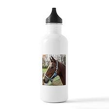 Morgan Horse in Field Water Bottle