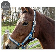 Morgan Horse in Field Puzzle