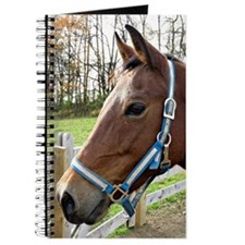 Morgan Horse in Field Journal