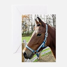 Morgan Horse in Field Greeting Cards