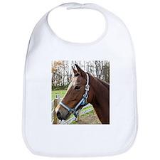 Morgan Horse in Field Bib