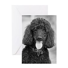 Black Poodle Greeting Cards