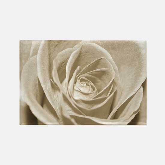 Sepia Rose Magnets