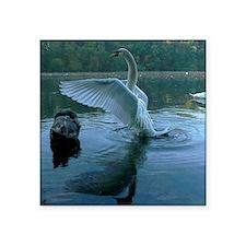 "swans Square Sticker 3"" x 3"""