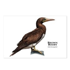 Brown Booby Postcards (Package of 8)