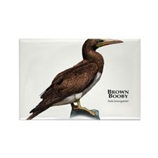 Brown Booby Rectangle Magnet