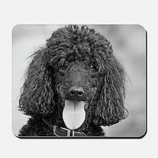 Black Poodle Mousepad