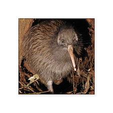 """New Zealand Kiwi Bird Square Sticker 3"""" x 3"""""""
