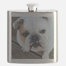 English Bulldog Flask