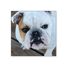 "English Bulldog Square Sticker 3"" x 3"""