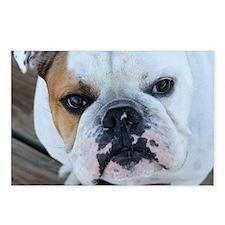 English Bulldog Postcards (Package of 8)