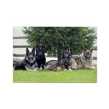Cute German shepherds Rectangle Magnet (10 pack)