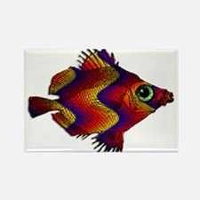 Green Eyed Discus Fish in Purple, Gold Or Magnets