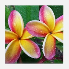 Maui Plumeria Tropical Flower Tile Coaster