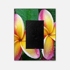 Maui Plumeria Tropical Flower Picture Frame