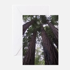 giant redwoods Greeting Cards