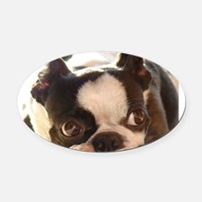 Adorable Jewels Oval Car Magnet