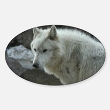 Gorgeous White Wolf Decal