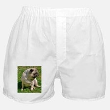 Sitting Fawn Pug Boxer Shorts