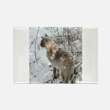 Burmese Cat in snow Magnets
