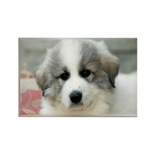 great pyrenees puppy Magnets