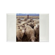 Flock of Sheep Magnets