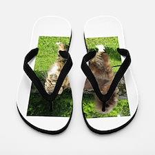norwegian forest cat full tabby Flip Flops